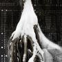 Le nid, estampe numérique sur papier, 100 x 75 cm, 2014